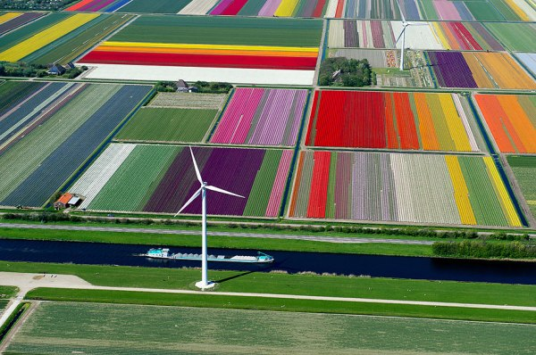 Tulip fields, Holand
