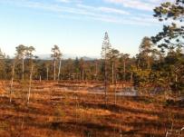 Fulufjällets Nationalpark, Sweden. Mountaintop Städjan in the the background.
