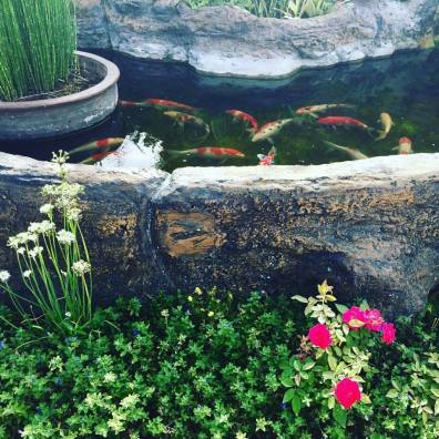 The fishes at Espacio Verde's pond.