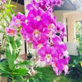 Flowers at Espacio Verde Resort